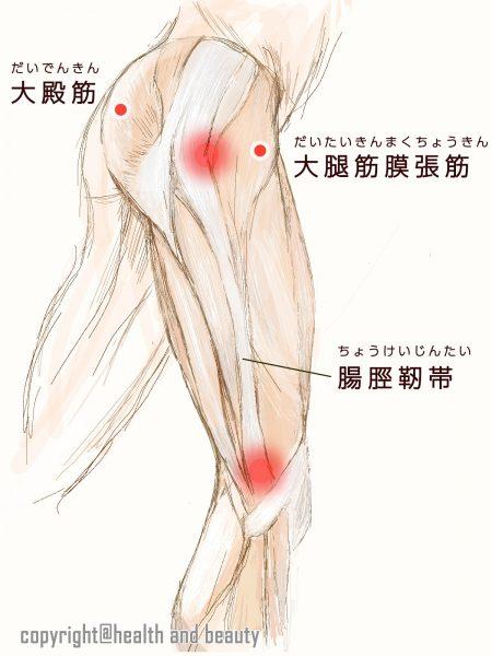 ランナー膝-筋肉